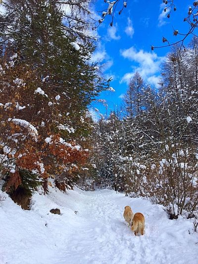 Walking in Nature. Walking LoveNature Silence Snow Beautifulnature Around Me Dogs Meandmydogs Sunnyday Sky Bluesky Ciel Lookaround Mondaymarch Lovemountains Countrylife Mountaingirl Today Mysecondhome Lovethisview MyMountains Trees Lovesnow Snowmarch