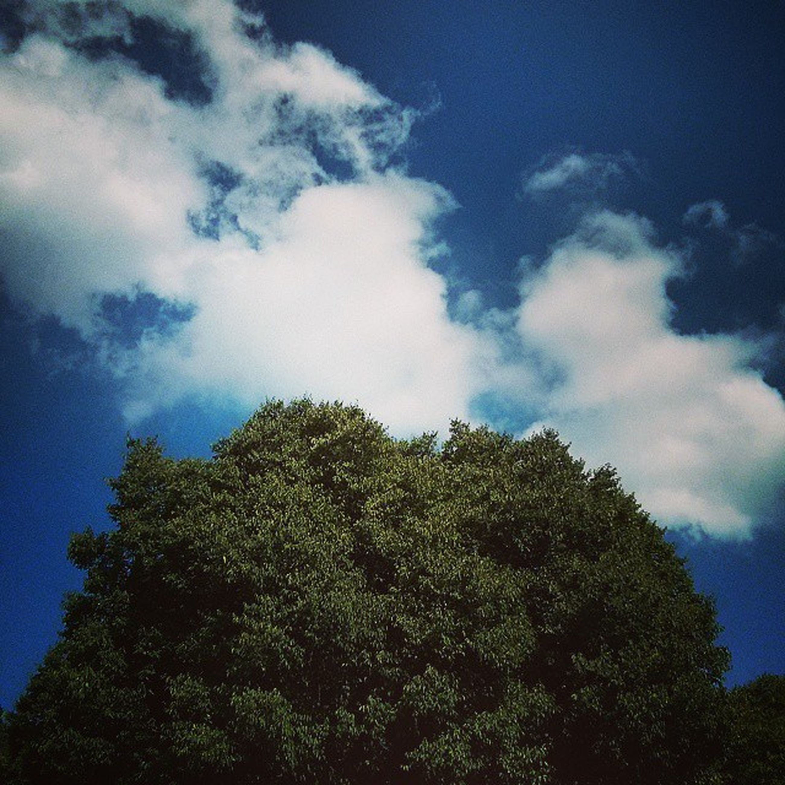 tree, low angle view, sky, growth, tranquility, beauty in nature, nature, blue, cloud - sky, tranquil scene, scenics, outdoors, no people, day, cloud, green color, idyllic, high section, forest, cloudy