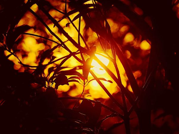 Patterns In Nature Selective Focusing Tree Art Sunset_collection Sunset Silhouettes Inspired By Nature EyeEm Nature Lover Great Atmosphere Sunset And Trees Sunset And Plants Branch Of A Tree
