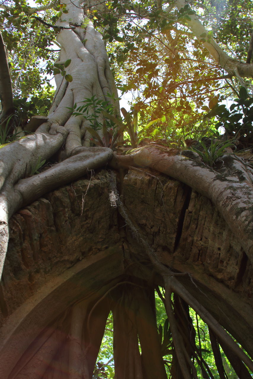 tree, tree trunk, low angle view, day, branch, growth, no people, outdoors, nature, statue, sculpture, ancient civilization, close-up, sky