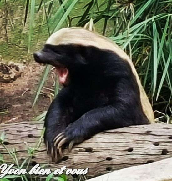cute Yvonbien Animal Funny Cool South Africa Voyage Trip Free Donald Trump Trump One Animal Bear Animal Wildlife Mammal Animal Themes No People Grass Outdoors Animals In The Wild Nature