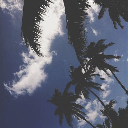 Christmasisland Coconut Trees Clouds Sunny Day