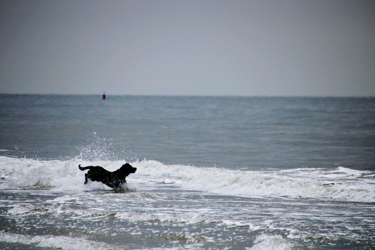 Dog in a sea