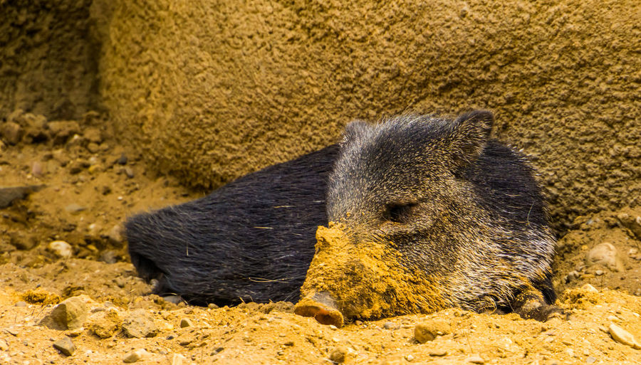Close-up of an animal lying on sand