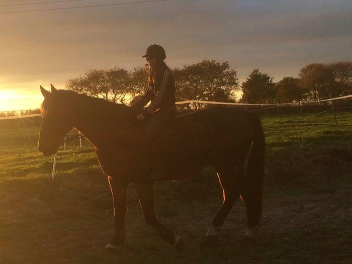 L'amour de ma vie : Puerto Ibarra, mon cheval. Horse Riding Horse Cheval Le Coucher Du Soleil