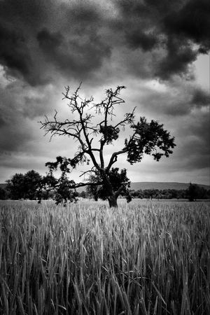Blackandwhite Magical Trees Landscape_Collection EyeEm Nature Lover