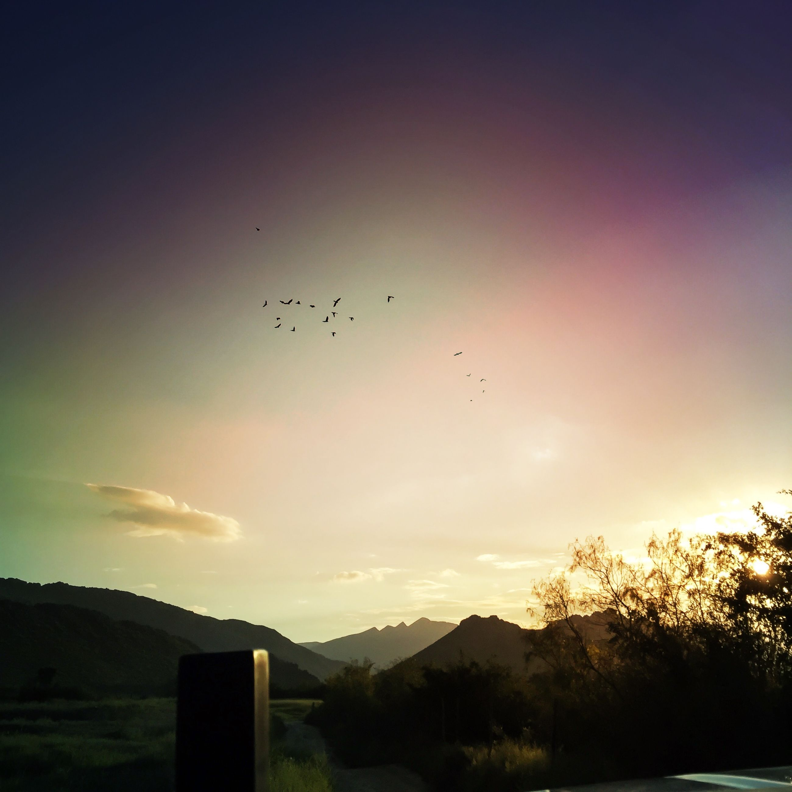 bird, animal themes, flying, animals in the wild, silhouette, wildlife, sunset, sky, tree, landscape, nature, beauty in nature, scenics, tranquil scene, tranquility, mountain, mid-air, flock of birds, outdoors