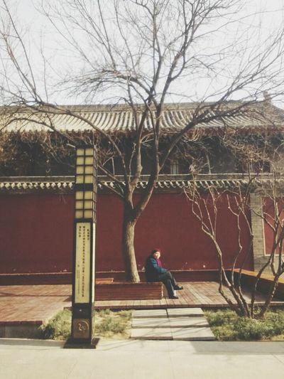 China .Xian Olderone Wall Tree