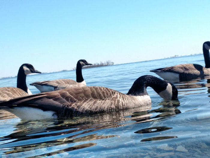 Beauty In Nature Bird Lake Outdoors Tranquility Water Water Surface Wildlife