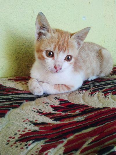 Cat sweet Little Pretty Littlecat  MyLittleCat 💕 🐱 Candy