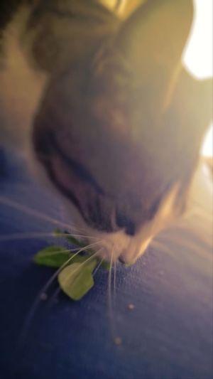 Cat Eating Salad