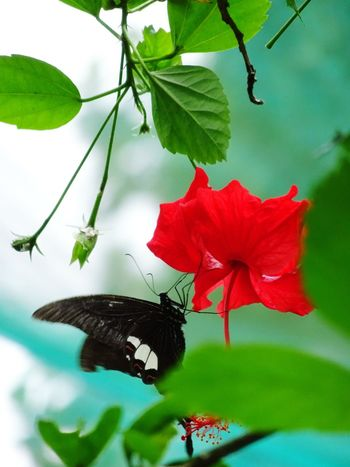 Beauty on nature Flower Flower Head Leaf Butterfly - Insect Red Insect Animal Themes Close-up Plant Pollination Symbiotic Relationship Animal Antenna