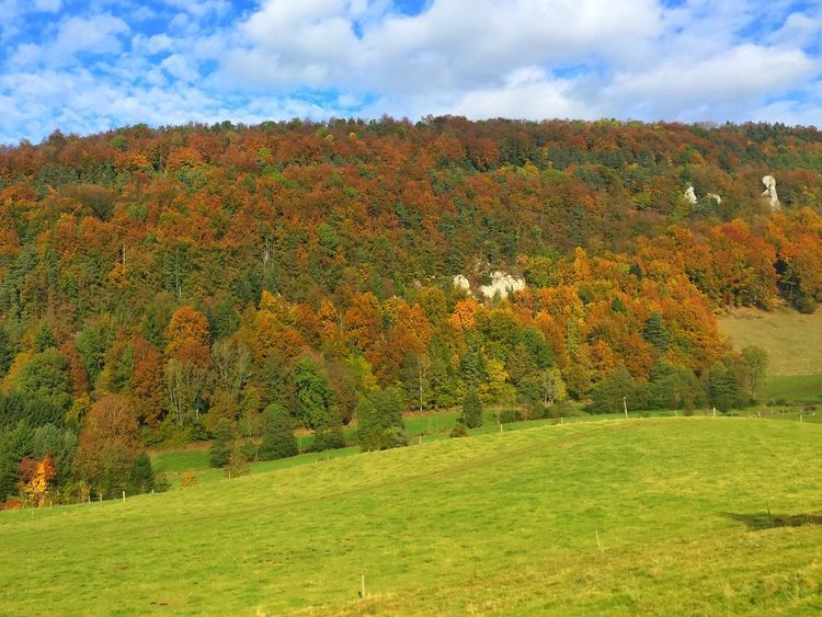 Autumn Colour Autumn Nature Trees Woods Forest Mountains Blue Sky Fields Colour Color Leaves Brown Gold Green Beauty In Nature Grass Switzerland Swiss View Clouds Rock Formation Cliff