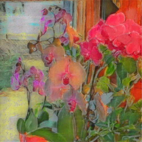 Mom's orchids. NEM Painterly NEM Still Life NEM Boundless Love Ultra Color Flowerporn Icolorama NEM GoodKarma (null)