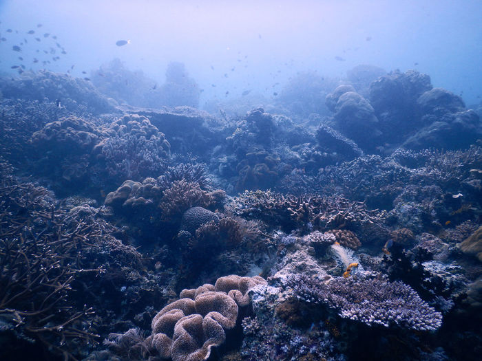 Scenic View Of Coral Reef Undersea