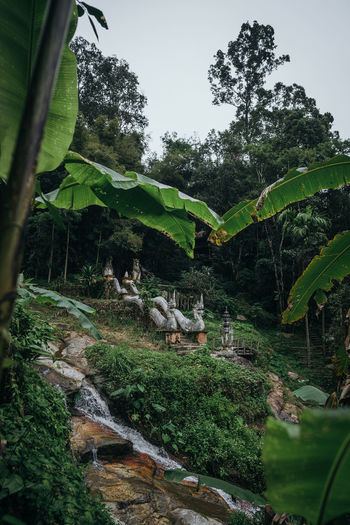 Tropical exotic temple Ancient Chiang Mai | Thailand Chiangmai Doi Suthep Exotic Historical Building Naga Thailand Travel Ancient Architecture Ancient Temple Buddhist Temple Frame Jungle Outdoors Plant Rainforest Serpent Temple Tree Tropical Tropical Tree Waterfall My Best Travel Photo