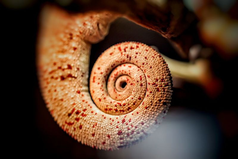 Nature's Diversities This Week On Eyeem Exceptional Photographs Bukalemun Tail Chameleon Chameleon_collection
