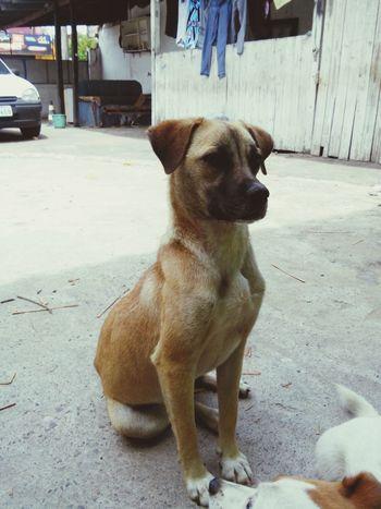 King Dog Cachorrão I Love My Dog