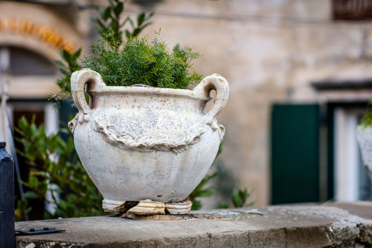 Pot plant Matera Matera Italy Matera2019 Matera - Capitale Della Cultura Matera View No People Plant Focus On Foreground Day Architecture Nature Outdoors Old Potted Plant Wall - Building Feature Building Exterior Travel Travel Destinations
