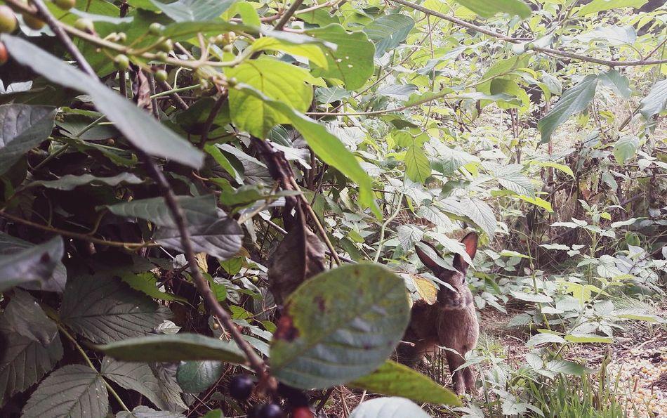 Kaninchen Rabbit 🐇 Nature Wood Plants 🌱 Beauty In Nature No People Freshness Animals In The Wild Animal Photography Wildlife Photography Wildlife & Nature Wild Nature Outdoors Pflanzen Sträucher Plant Day Garden Green