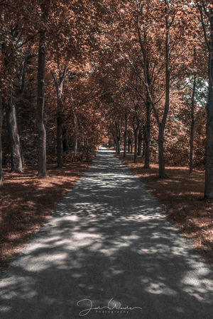 The Way Forward Shadow No People Scenics Beauty In Nature Tree Nature Outdoors Sunlight Autumn Pinaceae Forest Day Winter Sky Leaf