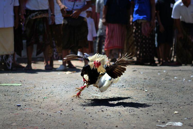 a Balinese