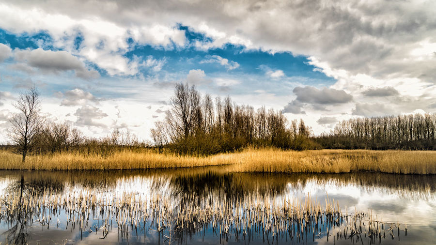 Beauty In Nature Cloud - Sky Day Grass Growth Idyllic Lake Nature No People Non-urban Scene Plant Reflection Reflection Lake Scenics - Nature Sky Tranquil Scene Tranquility Tree Water Waterfront