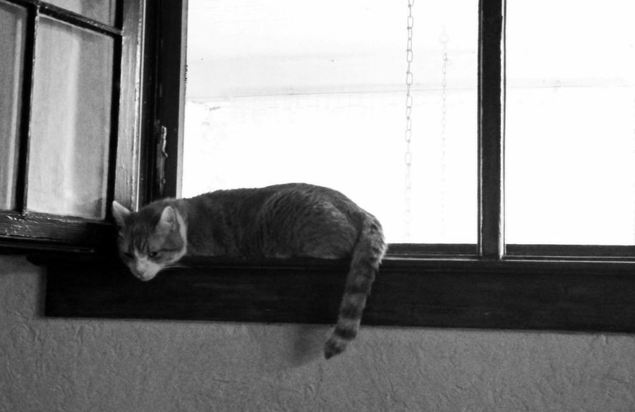 Faces Of Summer Melting Cat Cat On The Window Summertime Black And White Cats Of EyeEm