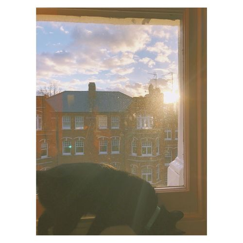 My lovely cat Relax Daydream Aftrnoon Cat Window Architecture Built Structure Building Exterior Cloud - Sky Indoors  City Looking Through Window Day