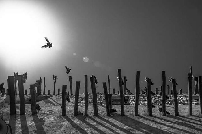 EyeEmNewHere Flying Bird Streetphotography_bw EyeEm Best Shots Eyeem2017 EyeEm Best Shots - Black + White Eyeem Philippines EyeEm Gallery Eye4black&white  Eyem Gallery Streetphotography Eye4black&white