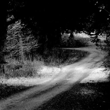 Nature. Tree. Road. Light. Spirit. Shadows & Lights OutdoorsNature Beauty Natur Is Beautiful Godmorning No People