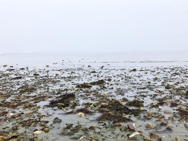 Near And Far Fog Beach
