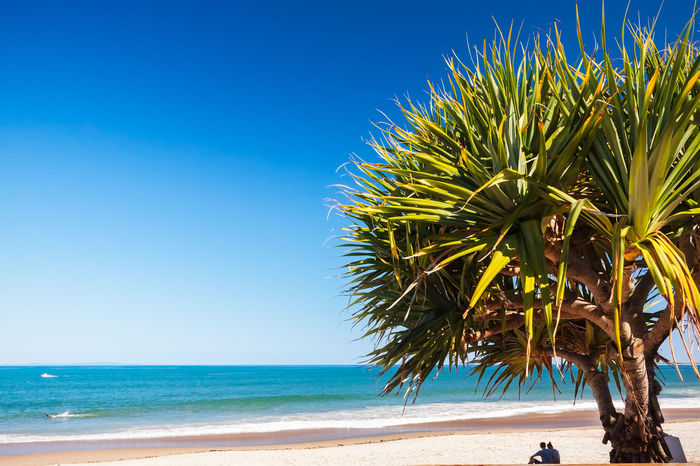Couple Sitting Under The Pandana Tree Australia Beach Beauty In Nature Caloundra Growth Holiday Horizon Over Water Nature Outdoors Palm Tree Queensland Sand Sea Shore Silhouette Summer Sun Tropical Climate Vacations Valentine Weekend Activities