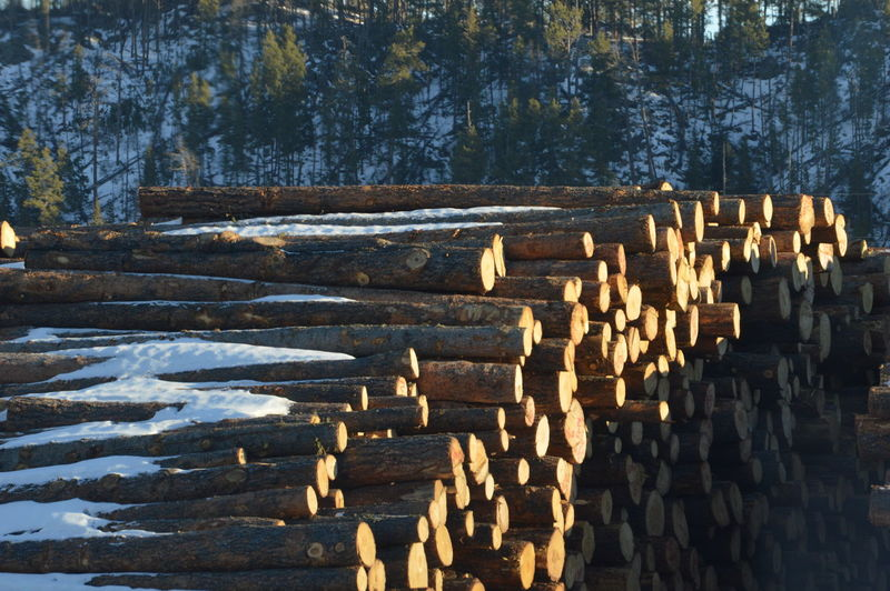 Tree No People Outdoors Day Nature OutWest Wildwildwest Logging Lumber Industry Mtrushmore Woodmill Eyeemmarket EyeEmBestPics Eye4photography  EyeEm Best Shots Fresh On Eyeem  Earthfocus Eyemmarket