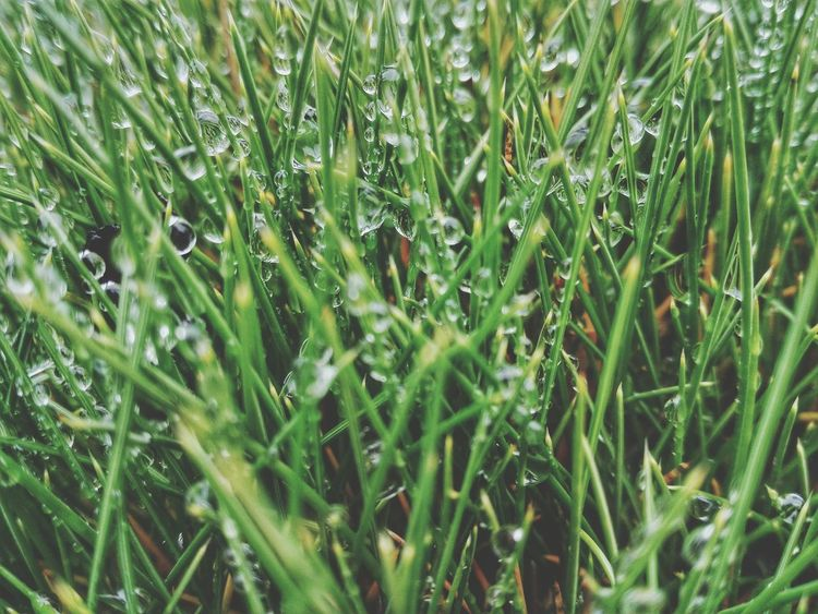 Green Color Growth Nature Grass Beauty In Nature No People DayBeauty In Nature Nature Plant Grass Backgrounds Dew Drops Dewdrops On Grass Dew On Plants Dew Plants 🌱 Outdoors