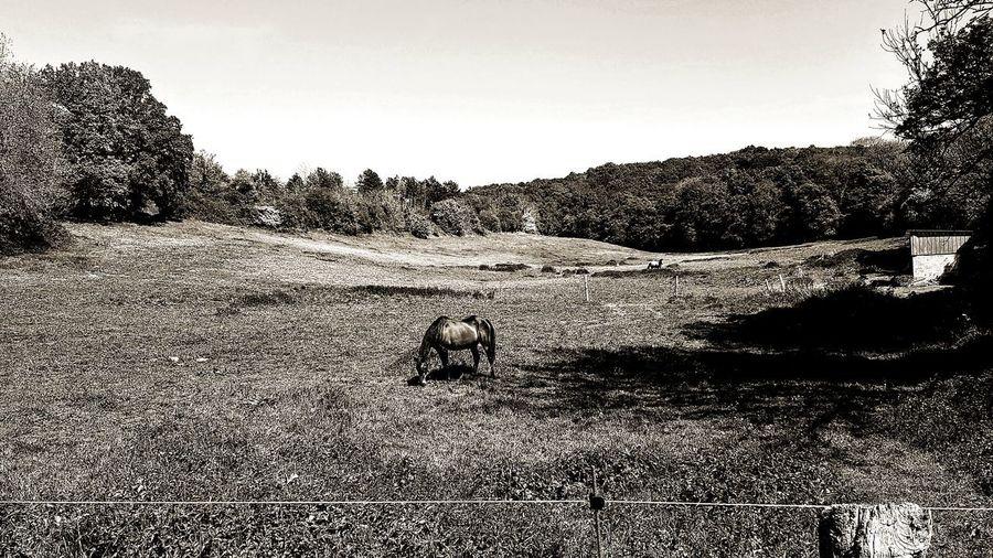cheval, nature,