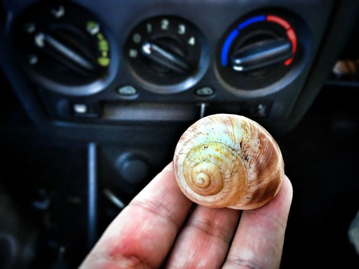 EyeEm Selects Man's hand holding a snail shell, inside a car. Human Hand One Person Real People Holding Human Finger Focus On Foreground Close-up Animal Themes People Snail Shell Snail Protection Mix Yourself A Good Time The Week On EyeEm
