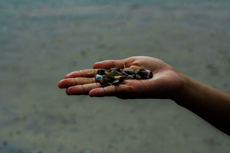 Cropped hand of woman holding stones at beach