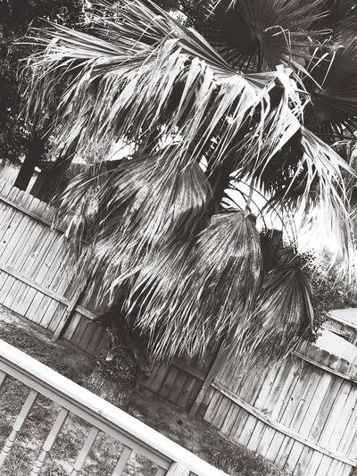 Sailormouth black&whites