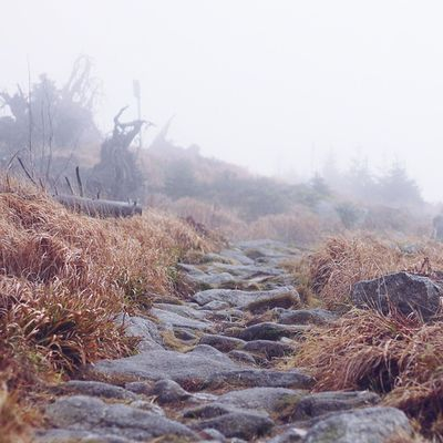 Went trekking today on this stone trail through the woods and lots of fog Mountains Bayerischerwald Forrest Vscocam