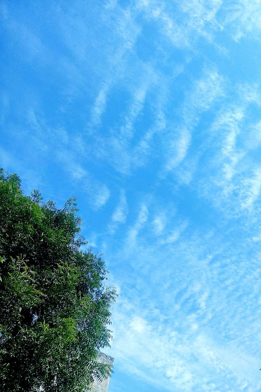 sky, low angle view, tree, cloud - sky, blue, day, nature, beauty in nature, growth, no people, outdoors, scenics