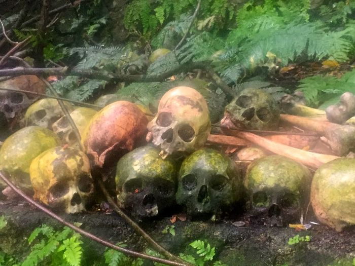 Skulls Stacked on Trunyan Island Bali Aga Beauty In Nature Bones Buried Burning Bury Cemetery Ceremony Culture Dead Death Funeral Religious  Ritual Skull Traditional Unburied Village