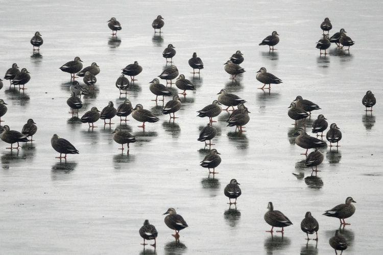 High angle view of ducks in water