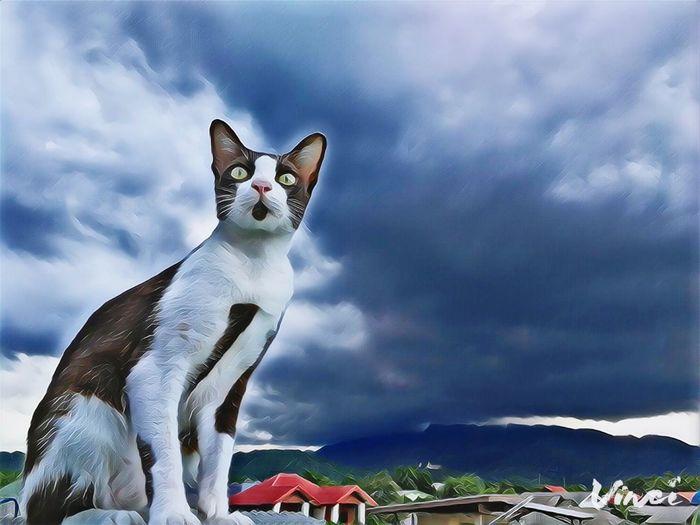 cat EyeEm