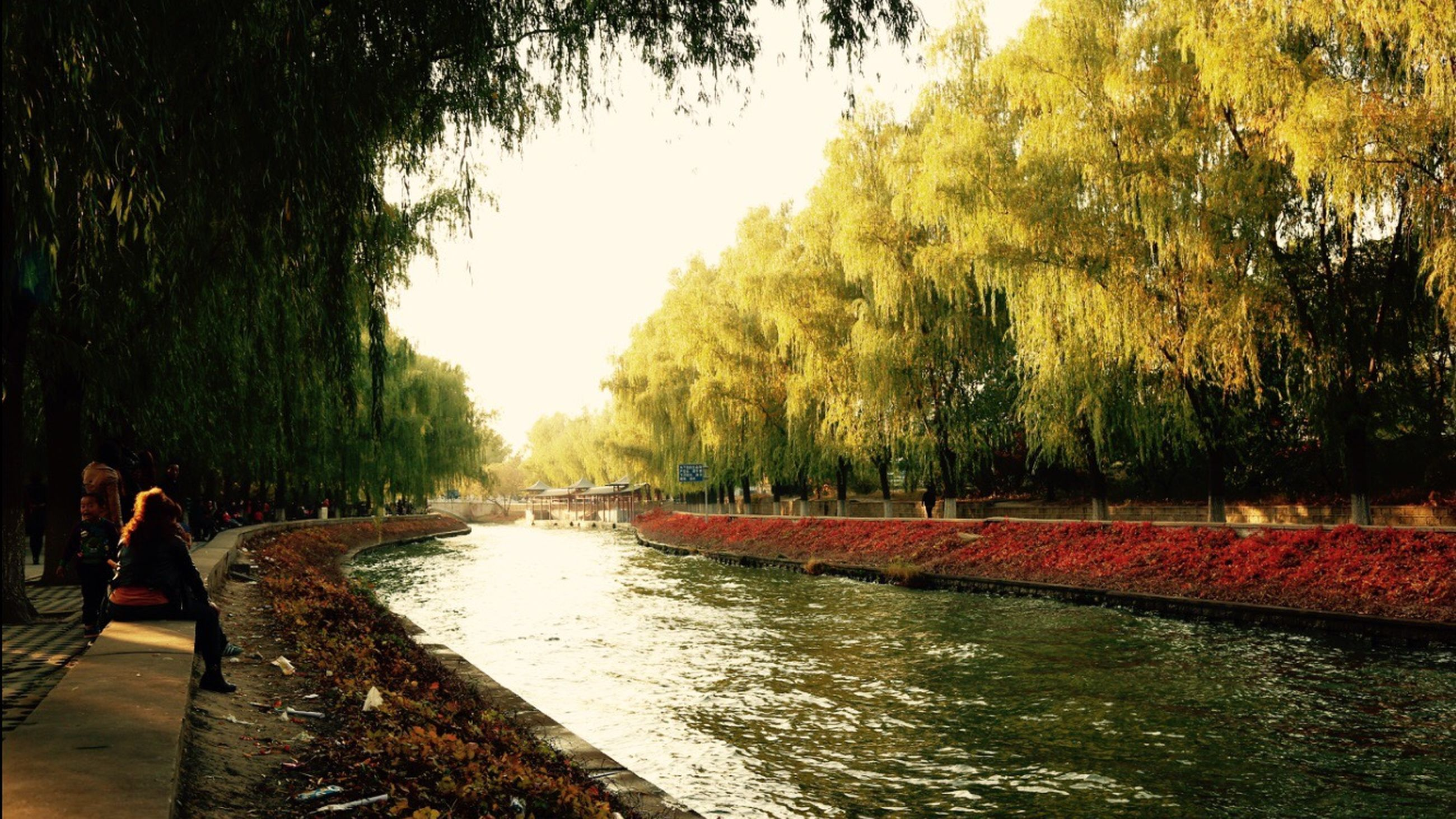 tree, water, tranquility, nature, growth, the way forward, tranquil scene, autumn, footpath, beauty in nature, park - man made space, canal, outdoors, scenics, river, transportation, incidental people, reflection, clear sky, street