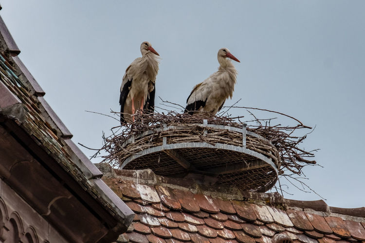 Low angle view of birds perching on roof against building