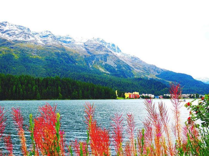 Switzerland st moritz Mountain Beauty In Nature Nature Outdoors Snow Mountain Range Lake Scenics Tree Day No People Water Flower Growth Plant Multi Colored Sky