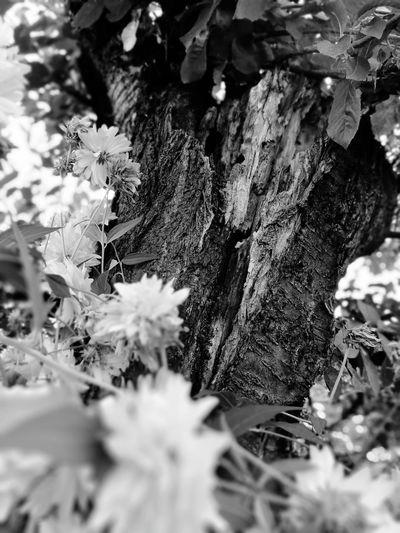 Snowflake Tree Flower Snow Leaf Winter Close-up Plant