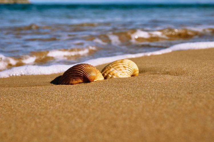 Close-up of seashell on beach