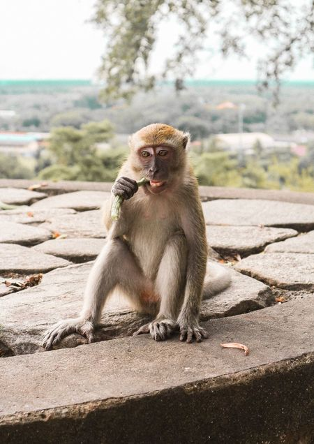 Snacking Baby Monkey Monkey Mammal Sunlight Mammal Sunlight Primate Animal Wildlife One Animal Animals In The Wild Sitting Nature Portrait Mammal Sunlight Mammal Sunlight Primate Animal Wildlife One Animal Animals In The Wild Sitting Nature Portrait
